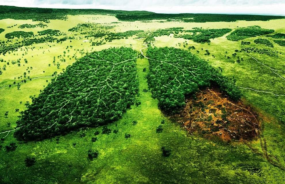 Campanha Ecologica